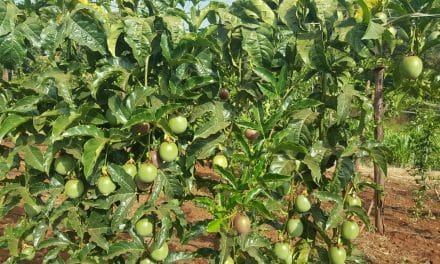 Passion Fruit Production Profits Per Acre