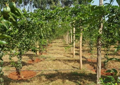 managing a passion farm properly is vital for profitability