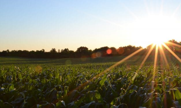 Crop Selection: How to Choose The Right Crop To Grow On Your Farm
