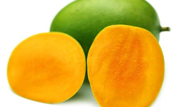 Growing Mangoes In Kenya