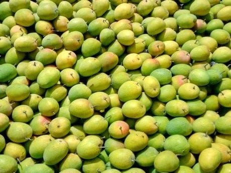 Mango Pests and Their Control