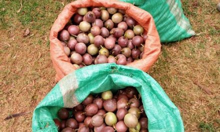 Passion Fruit: All About PassionFruit