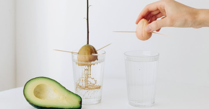 How To Grow Your Own Avocado Tree (And Give It A Chance At Bearing Fruit)