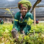Check This Out: Avocado farming on the rise in Africa