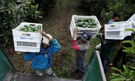 Why Mexican avocado producers are arming themselves to The Teeth