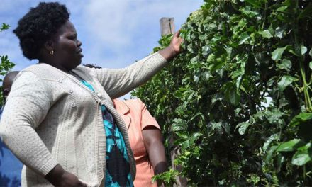 Passion Fruit Case Study: Alice Earns CEO'S Salary Farming Passion Fruit