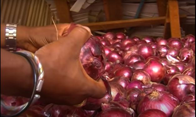 Check Out This Great Debate Between Growing Tomato vs Onion.