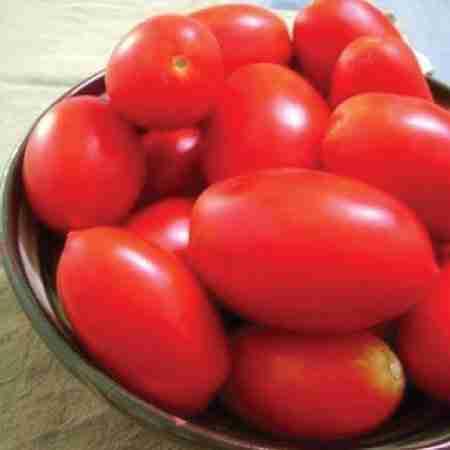 Tomato growing vs onion growing