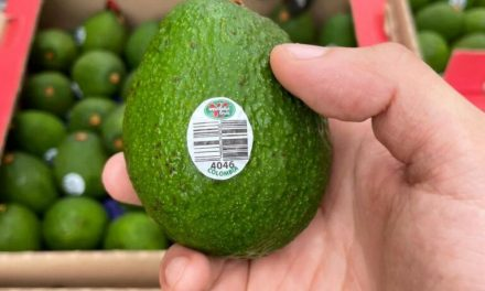 Great News as Westfalia the first to export avocados to South Korea