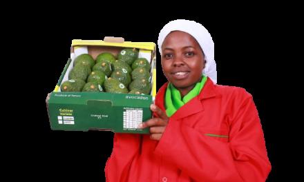 Kenya Avocado Market The Good Bad and Ugly