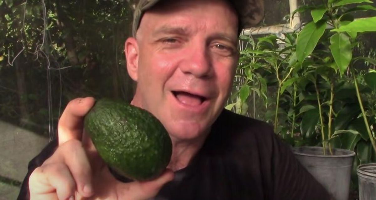 Amazing Secret why you can't grow Hass avocado trees from Hass seeds