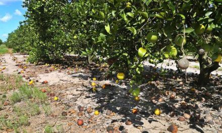 Great Dissapointment As Florida Citrus Season Comes to an end
