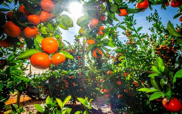 Great News as Citrus shipments from South Africa on schedule despite Recent Riots