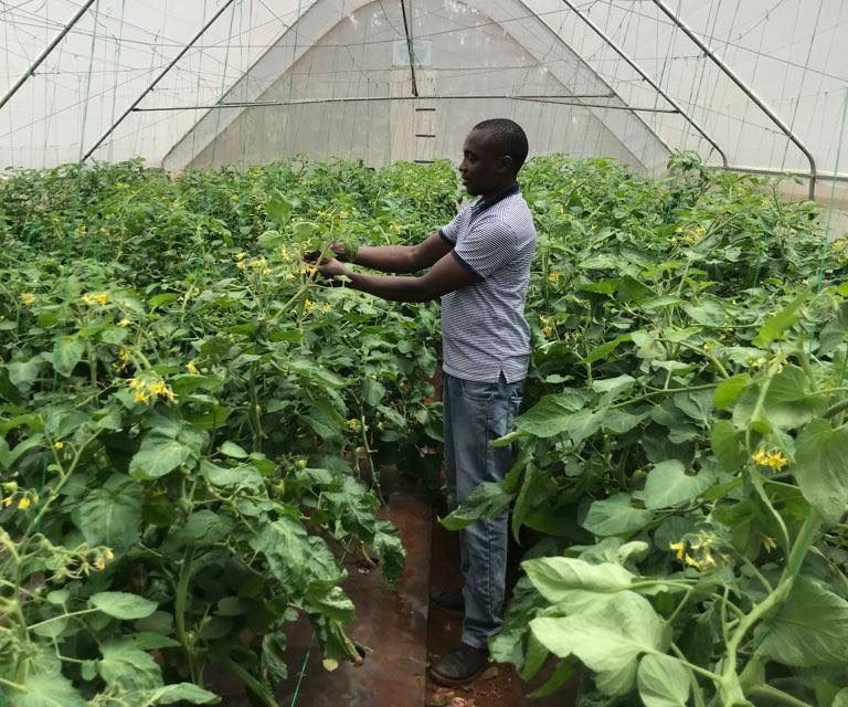 Greenhouse farming in Kenya: Know These Insider Tips, And You'll make Unbelievable Cash!