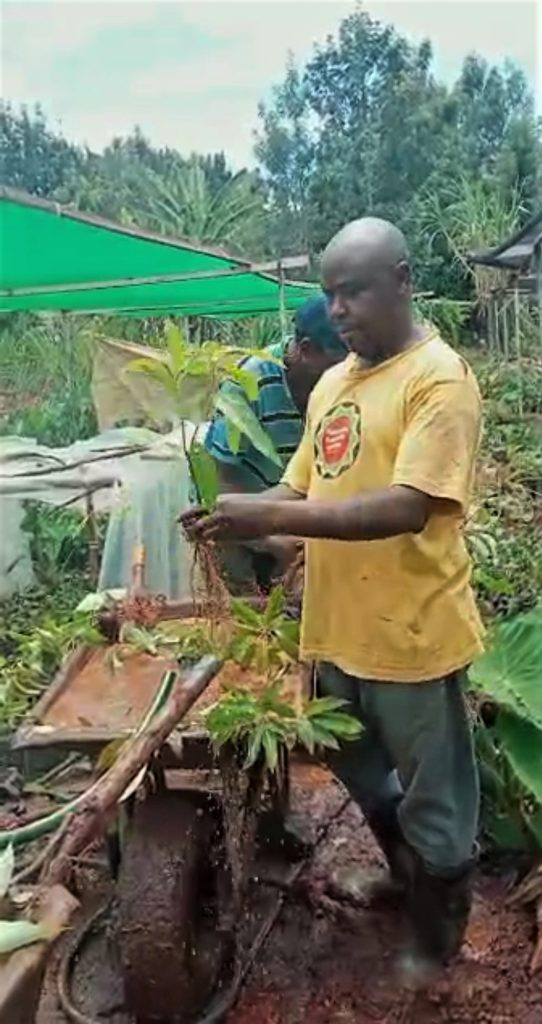 Washing of soil from Avocado seedling to make it comply with the law