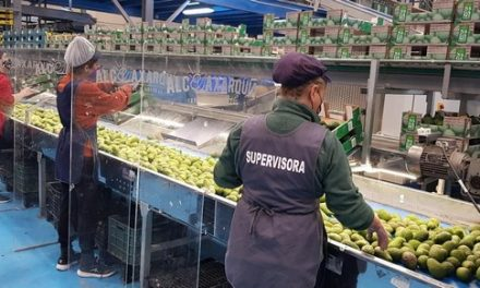 Good News as first Spanish mangoes Hit the market Selling at a Bargain!
