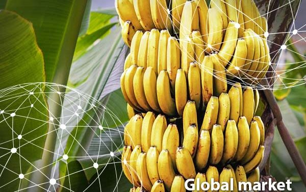 Great times Ahead for GLOBAL BANANA Production Market